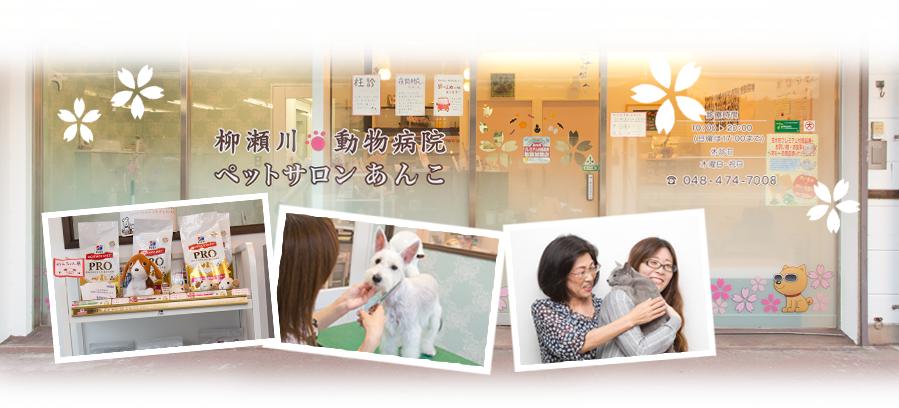 柳瀬川動物病院ペットサロンあんこ